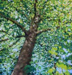 Plane Tree, Victoria Park