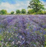 Somerset Lavender by Sarah Brown
