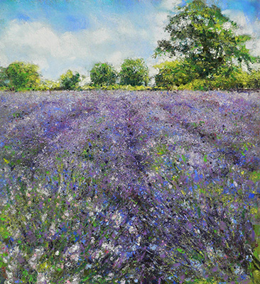 Somerset Lavender by Sarah Brown